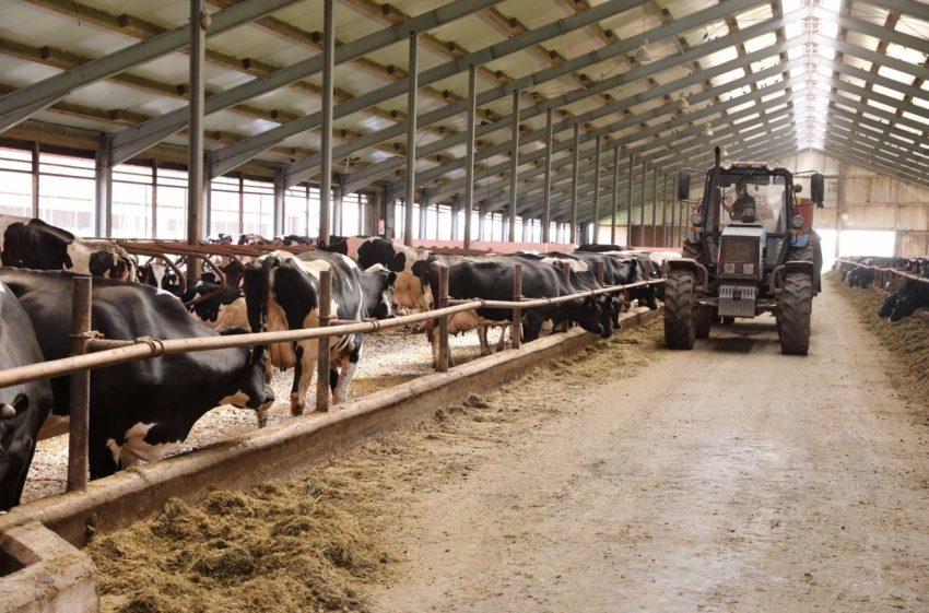 В Раменском районе планируют ввести в оборот 1200 га сельхозугодий