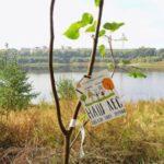 Акция «Наш лес. Посади свое дерево»пройдет 21 сентября